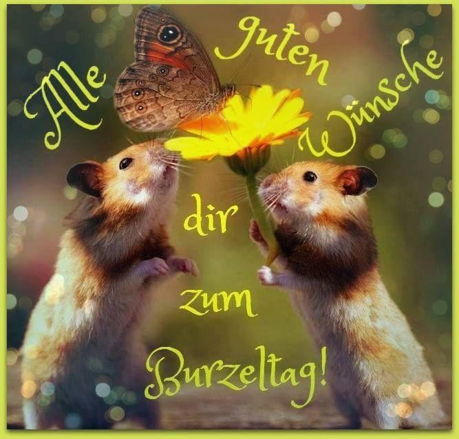 Alle guten Wünsche dir zum Burzeltag! #alles_gute_zum_geburtstag #geburtstag…