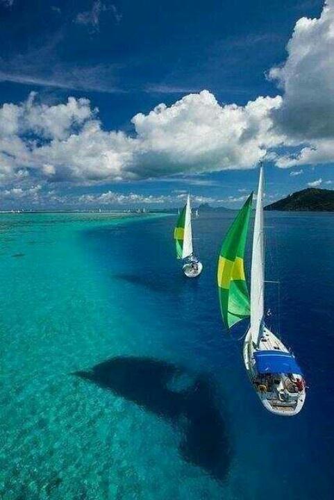 Bora Bora- It looks like they're sailing on air!