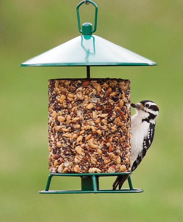 17 best images about home for the birds on pinterest for Mesh feeder ideas