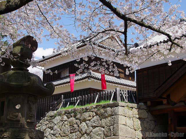 上田城 (Ueda Castle in spring)