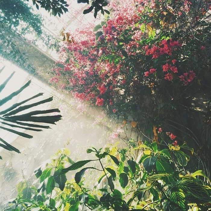 A Place full of magic... Isn't it? #wogrodzienajlepiej #wogrodzienajlepiejpl #flowers #kwiaty #szklarnia #oranzeria #instaflower #magicplace #love #ogrod #garden #gardening