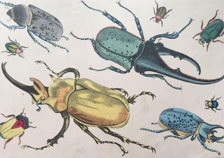 19th Century Oliver Goldsmith Beetles / Insects Engraving from shopontheboulevard on Ruby Lane