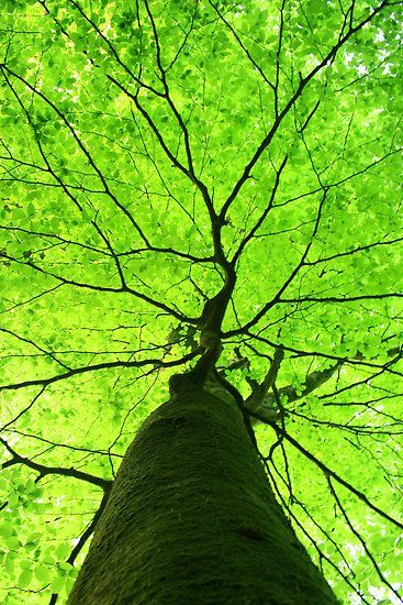 lovely tree~