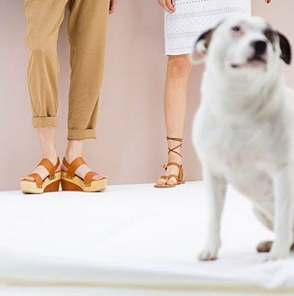 Passion for Shoes? Check our link in the bio :) #Pennyblack #newin #Newseason #newcolours #PE16 #fashion #dogsofinstagram #shoes #instadaily