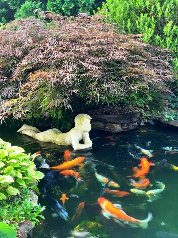 4894 best images about garden ponds on pinterest for Garden pond life