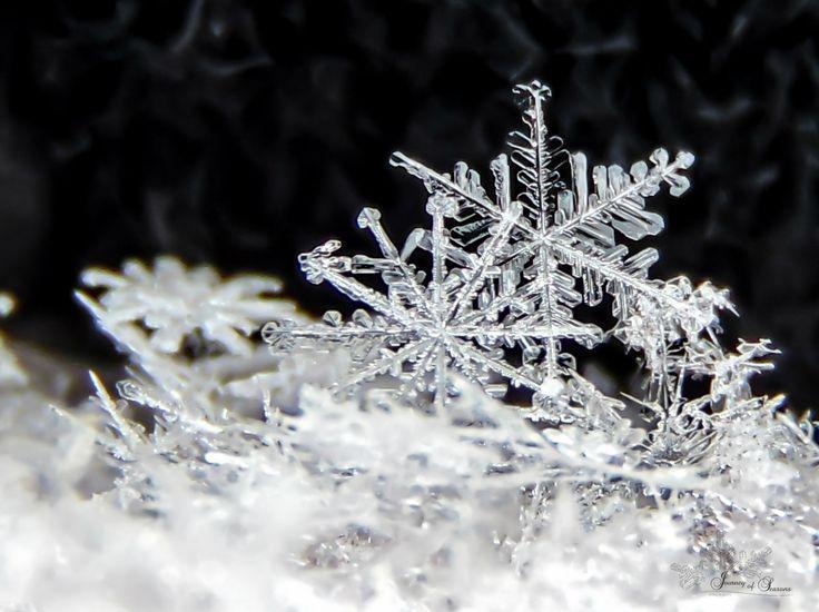 #snowflake #macro #photography #winter #nature #cold #frozen #beautiful #ice