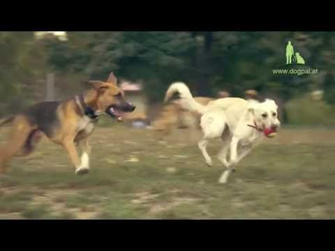 Hundezonen, Auslaufflächen & Ausflugsziele Wien/NÖ Test TEIL 5 (Hundepar...