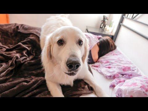 Expectation Vs Reality Funny Dog Bailey Waking Up Owner Youtube