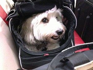 How to travel with your dog on an airplane