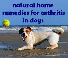 Natural home remedies for arthritis in dogs
