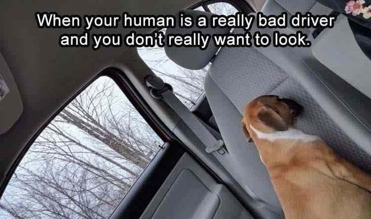 40 Funny Animal Pictures