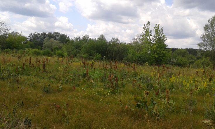 Mielnik, Bug meadows