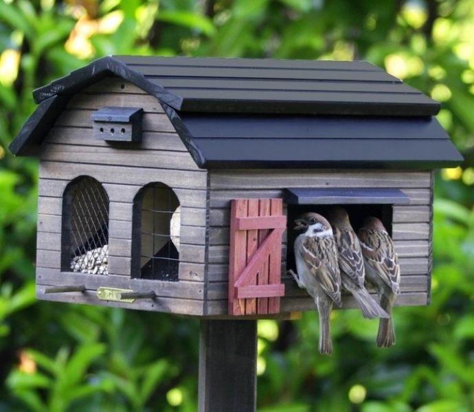 Самые необычные кормушки для птиц