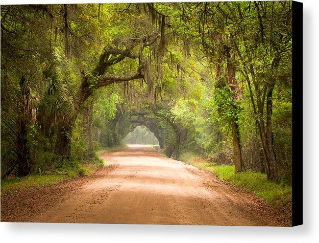 Dirt Road Canvas Print featuring the photograph Charleston Sc Edisto Island Dirt Road - The Deep South by Dave Allen