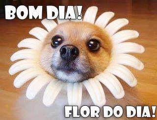 IMAGENS E FRASES E FACEBOOK: Bom Dia Cachorro