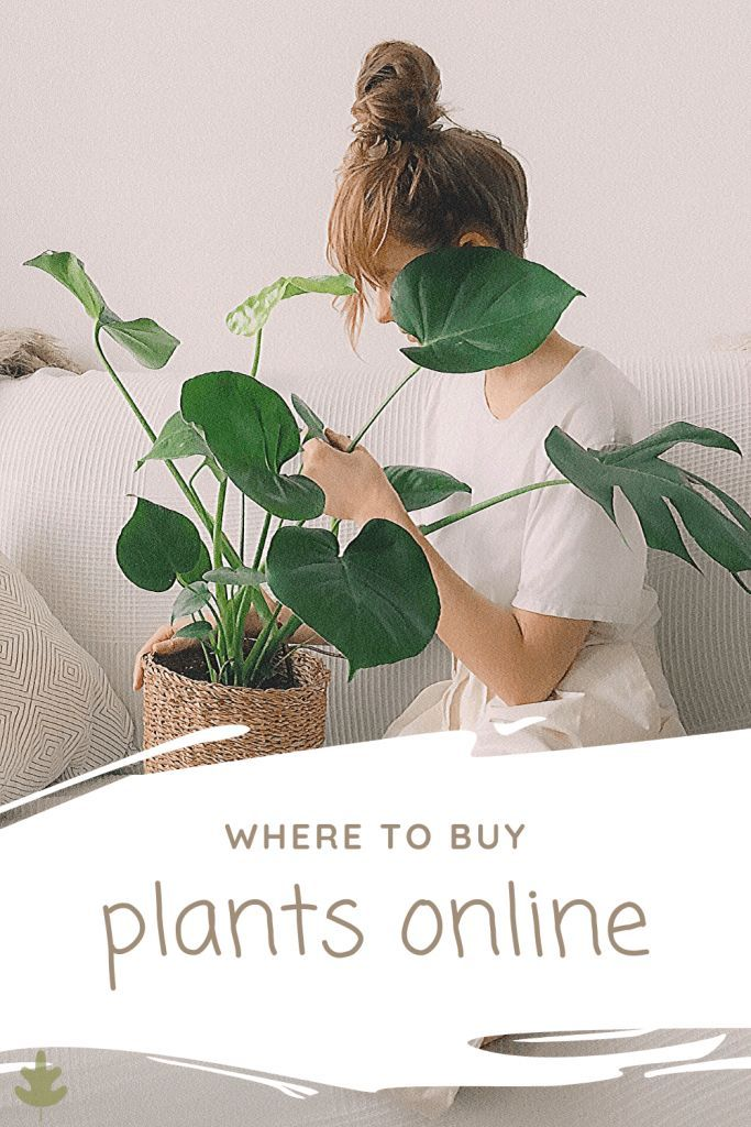How Where To Buy Plants Online In 2020 Buy Plants Online Buy Plants Plants