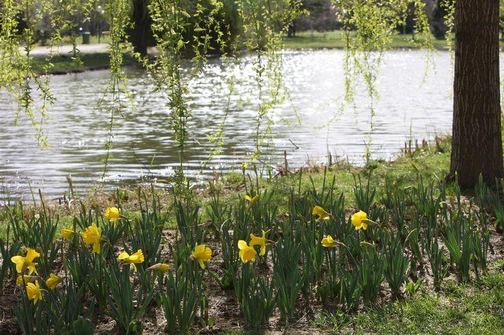 """Botanik Park """"Bursa yeşilinin minyatürü"""" - Parkta; Japon bahçesi, İngiliz bahçesi, Fransız bahçesi, gül bahçesi, açelya-orman gülü bahçesi, kokulu bitkiler bahçesi, kaya bahçesi, renk bahçeleri, şekilli bitkiler bahçeleri vardır."""