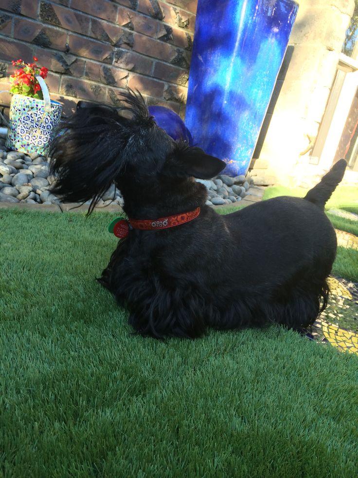 Topsy surveying the garden
