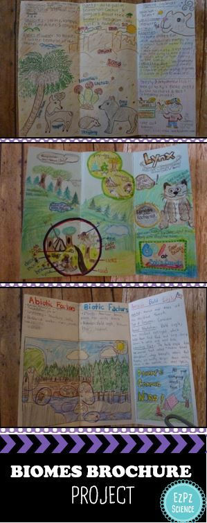 Have your student create a brochure to show their understanding of biomes. Instructions and requirements included!