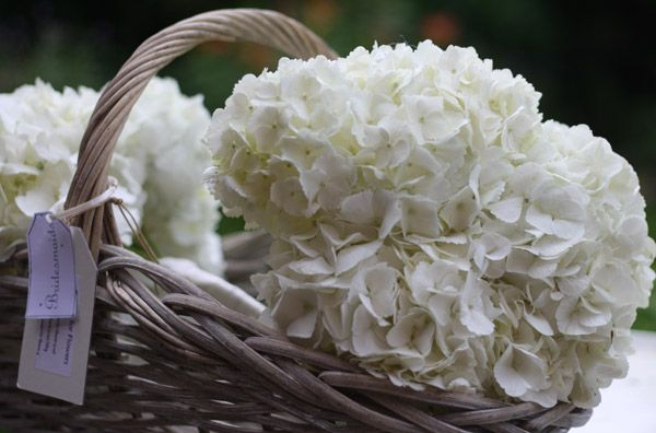 hydrangeas for weddings | White Wedding Flowers ~ English David Austin Roses & Hydrangeas At ...