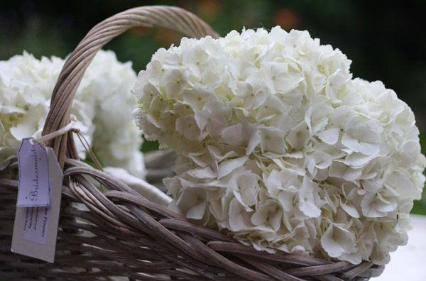 hydrangeas for weddings   White Wedding Flowers ~ English David Austin Roses & Hydrangeas At ...
