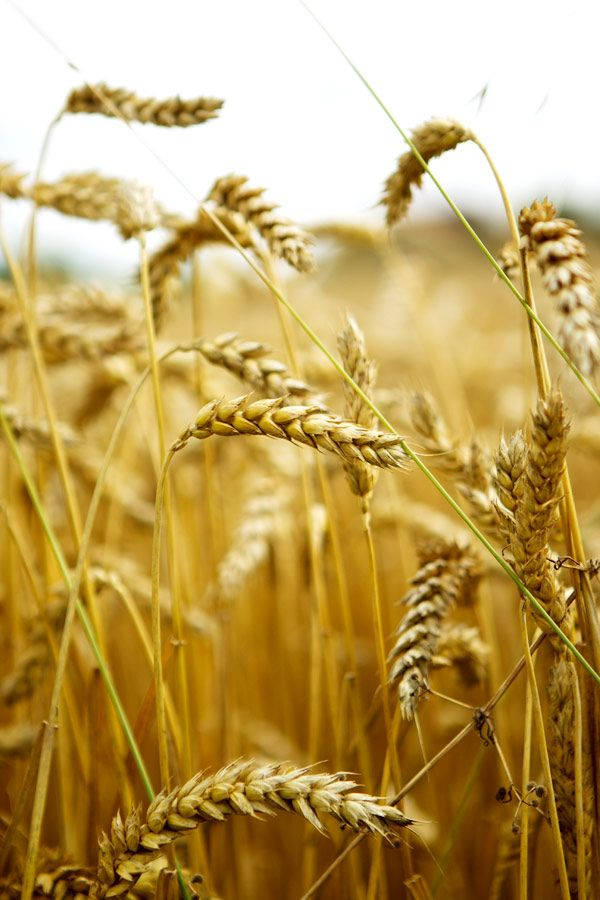 photo taken from: http://www.latartinegourmande.com/2012/09/26/gluten-free-brown-butter-pistachio-cake-recipe/