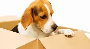 Armalan Moving Services LLC  P.U.C.-T. 190654 www.armalanservices.com (650)595-2038   #ArmalanMovingServices #MovingCompany  #TheBigDay