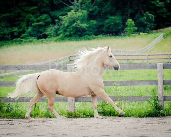 Horse Photography Horse Art 8x10 Photo by PhotoX1 on Etsy