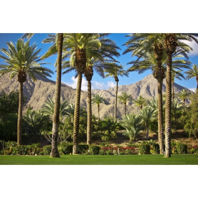 Palm Springs Tourism And Holidays Best Of Palm Springs: 17 Best Images About Palm Springs / Coachella Valley On