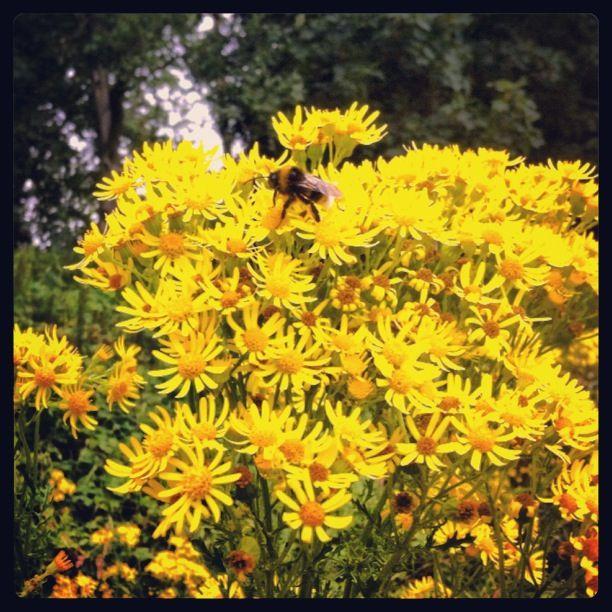 Busy Bumblebee Zzzzz