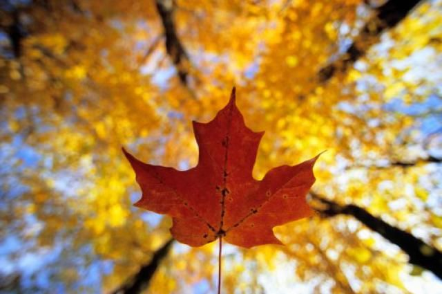 Fall Foliage in Canada - An Overview of Canada Fall Foliage