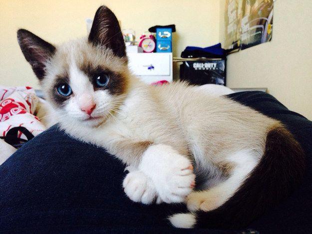 Und diese schicke Dame, die immer noch in ihre Pfoten hineinwachsen muss.   39 Über liebenswert Ki …   – Katzen