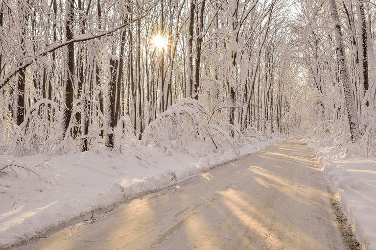 Zima, Droga, Las, Promienie, Słońca