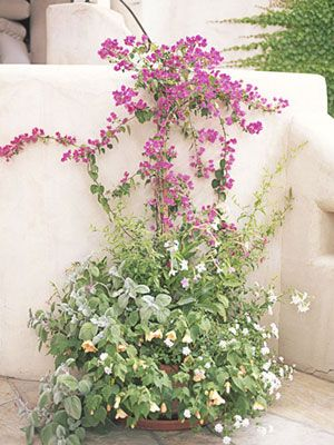Liven up a plain patio wall with a sun-seeking climber, like bougainvillea — the twining vertical vines balance the bushiness below.