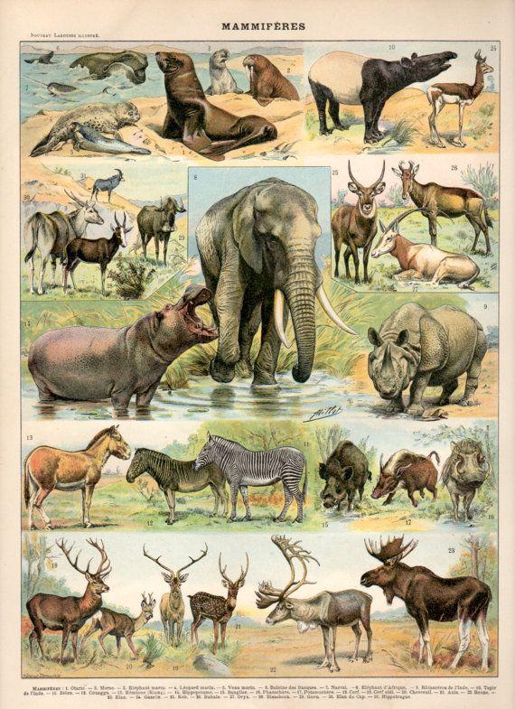 Mammals, 1897 Antique Print, African Mammals Print, Animals Poster, Marine Mammals, Elephant, Rhino, Deer, Seal, Zebra, Bears, Cats, Monkeys