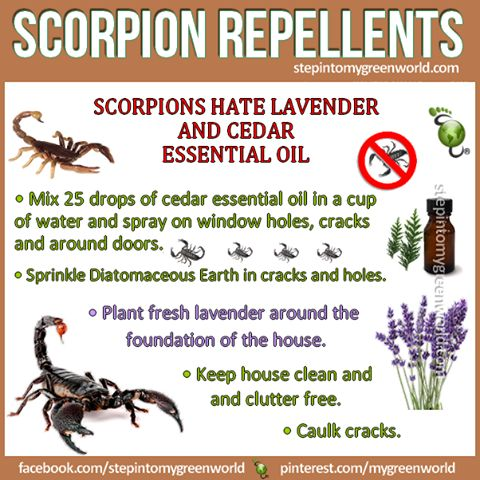 ☛ You asked, we answer. These are very aggressive scorpion repellents: FOR ALL YOU NEED TO KNOW: http://www.stepintomygreenworld.com/healthyliving/around-the-home/scorpio-repellents/ ✒ Share | Like | Re-pin | Comment
