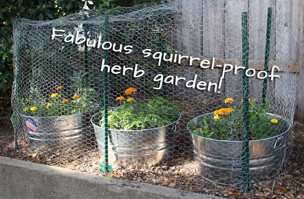 How to Plant an Herb Garden to Keep Squirrels Out