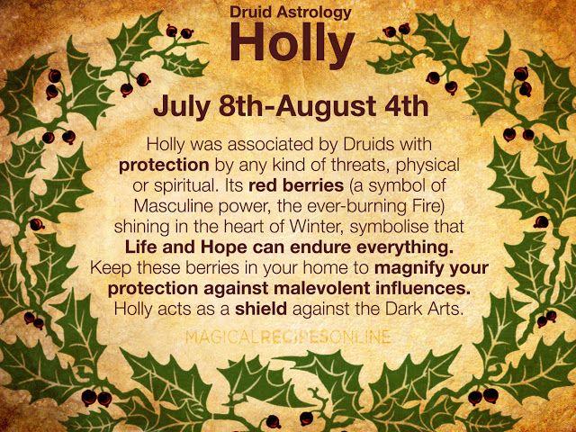 holly Celtic Astrology