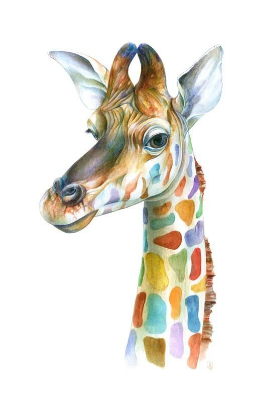 girafe - anon