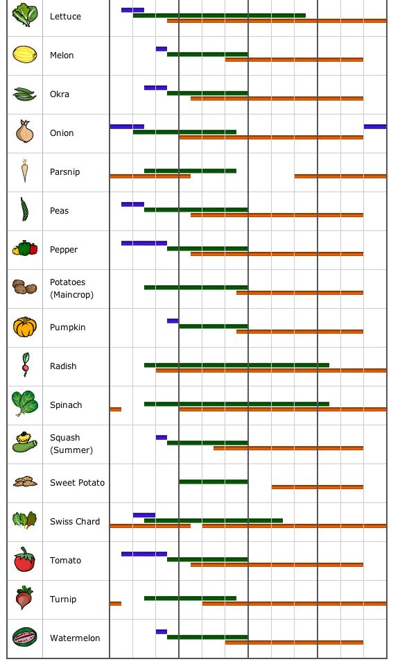 veggie garden planting guide