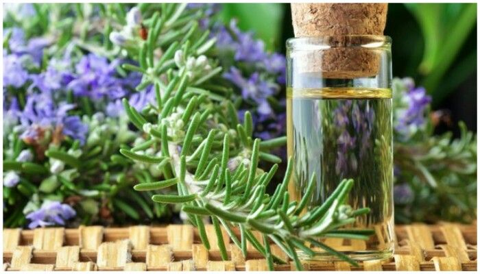Масло розмарина для волос: состав, свойства, применение, рецепты