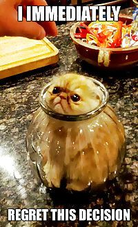Kitten in Jar: I Immediately Regret This Decision | Picture 49334