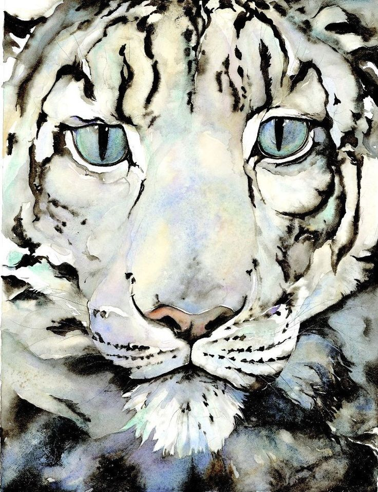 """Front cover for """"The Snow Leopard"""", by Jackie Morris"""