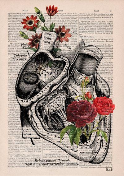 Fiorito cuore umano anatomia stampa su dizionario page di PRRINT