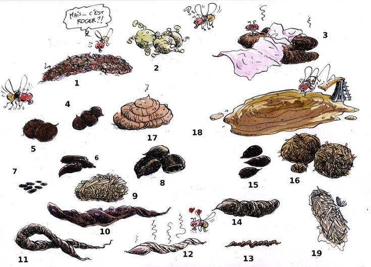 Crott' Art.  Jeu : Devine qui a fait ça? Les coupables sont : le rat, le cerf, la belette, le castor, le hérisson, le chevreuil, la fouine, la loutre, la belette, le putois, le lapin, la souris, le chat sauvage, le chien domestique, le cheval, la vache, l'homme et le martien. A vous de trouver quelle crotte est à qui!