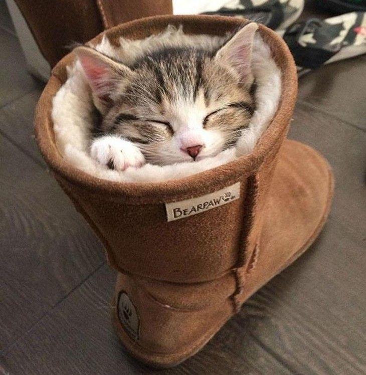 gatos durmiendo en extrañas posiciones