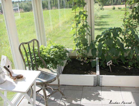 planteringslådor i växthus