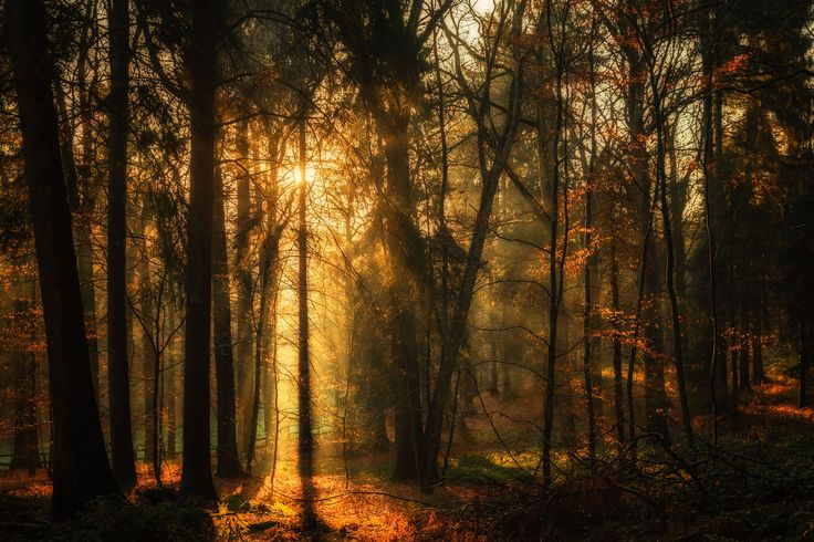 Moody forest by Jean-Francois Chaubard on 500px