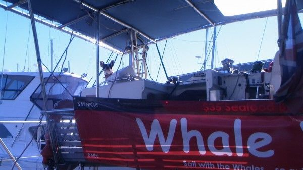 08-07-2014-Whale-and-Dolphin-Watch