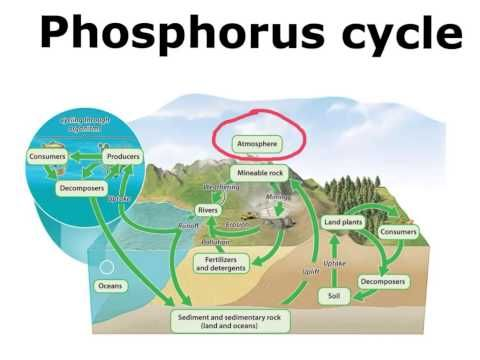 understanding phosphorus cycles and how it affects our ecosystem Understanding the role of phosphorus in aquatic plant growth and the  this nutrient on our ecosystems  clear explanation of the phosphorus cycle along with .